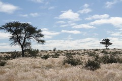 2015_Stampriet_Fieldwork-Kirstin_Game4 (The International Groundwater Centre) Tags: groundwater governance africa southafrica botswana namibia ramotswa aquifer kirstin conti