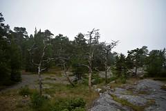 DSC_1531 (Unknown Explorer from Finland) Tags: porkkala kirkkonummi