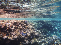 Fish world (lgoub) Tags: egypt underwater sharmelsheikh redsea snorkeling diving blue corals fish