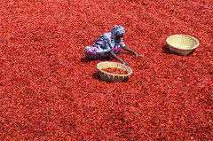 Working woman! (ashik mahmud 1847) Tags: bangladesh d5100 nikkor woman colorful red foods working sunny pattern people redchilies ngc