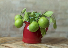 Limes from my tree 19/31 (z_a_r_a) Tags: still life classic limes harvest fall red jug green