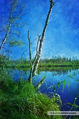 im Ried / in the reed #2 (Howdys) Tags: wald weiher see landschaft nikon d7100 badenwrttemberg deutschland ried sumpf moor birken bume himmel blau herbst spiegelung oberschwaben photoshop
