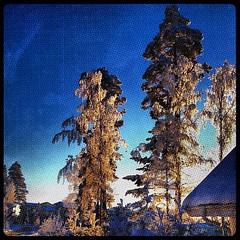 tree #trees #sweden #pine #pines #sn... (TittaBilder) Tags: uploaded:by=flickstagram instagram:photo=394751296460295681271432306 tree trees sweden pine pines sn snow ice is sky sun sunset tr tall tallar himmel bl winter vinter instagram iphone