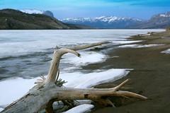Cold Winters (prasan.naik) Tags: winter snow canada mountains tree ice beach river dead frozen log jasper alberta