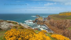 Lands End Gorse (Twogiantscoops) Tags: ocean panorama cliff seascape canon landscape golden coast holidays cornwall plymouth coastal landsend coastline lowtide iconic 1740mm cornish gorse cloudformations 2013 5dmk2 iplymouth twogianscoops iplymotuh scoopsimages enysdodmanthearcharmedknight