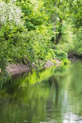 Wonderfull Nature (san00k) Tags: plants nature river germany deutschland hessen natur pflanzen blumen bach fluss marburg mystic flowser gewsser