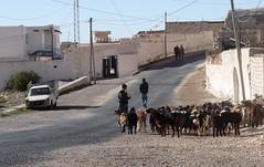 Tamezret, Tunisia. (James Holme) Tags: africa northafrica tunisia goats tamezret explorecouk