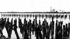 (alliance1) Tags: ocean bw marina bay eureka humbolt 16x9crop summicron35mmasph leicam9