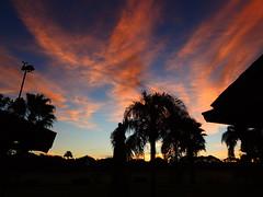 November 8th Sunrise (Jim Mullhaupt) Tags: morning pink blue trees red wallpaper orange sun color weather silhouette sunrise palms landscape dawn nikon flickr florida coolpix bradenton p510 mullhaupt jimmullhaupt