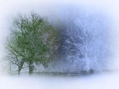 #Coesistenza (graceindirain) Tags: coesistenza diversit coexistence diversity trees green ice hiver spring textured processed digitalart graceindirain