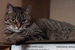 boredom (margycrane) Tags: boredom zosia zosiacat cat catinabox box