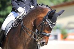 IMG_7602 (dreiwn) Tags: dressage dressur dressuur pferd reitturnier turnierreiten pferdesport horse horseback horseriding equestrian reitverein dressurprfung kandare doublebridle reiten pferde reitplatz ridingarena