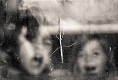 fascinacin (Ramn Medina) Tags: nios kids animales animals cristal ventana window glass alotrolado insectopalo stickinsect artlibres