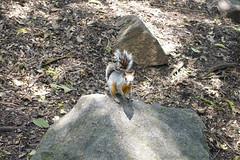 DSC02102 (rad!x) Tags: ardilla chapultepec ciudaddemexico mexico mexicocity parque reforma squirrel everyone vacation