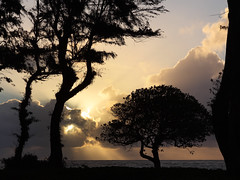 first morning (1600 Squirrels) Tags: 1600squirrels photo 5dii lenstagged canon24105f4 sunrise morning cloud tree silhouette coast pacific ocean waipouli kapaa eastside kauai hawaii usa tonemapped aston islanderonthebeach kauaicounty