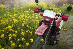 L1008457c (haru__q) Tags: leica m8 leitz summicron field mustard  honda crm250r motorcycle 2st