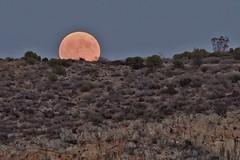 Harvest Moon (n.pantazis) Tags: moon fullmoon harvestmoon september moonrise rise obscure trees sky vouliagmeni pentaxks2 tamron