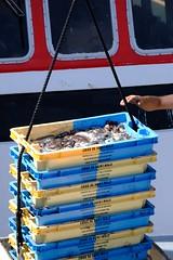 DSCF1504 (Jc Mercier) Tags: pche retourdepche fishermen marins cancale