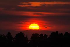 Halkidiki Sunset (Yannis_K) Tags: greece halkidiki kassandria    sunset sani  treeline pinetrees yannisk nikond7100 nikon70300mmf4556vr