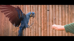 parrot (craigfrancies) Tags: wildlife animal animals photography canon 80d cinematography filter 3dlut lu lut aspect ratio 235 leaks