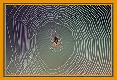 AH62_8605 (der_andyrandy) Tags: spinne spinnennetz macro canoneos7d amazingamazing thisphotorocks infinitexposure wow