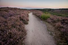 Sunset Postbank (M.N. van der Kolk) Tags: nederland netherlands postbank veluwezoom zonsondergang heath heide sunset