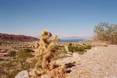 Boulder City, Nevada circa 2016 (Zach Bradley Photography) Tags: outdoor cactus indie mojavedesert lakemead bouldercity nevada barstow california desert filmphotography landscape emotive nikon film filmisnotdead explore wanderlust southwest vintage places