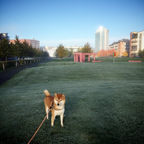 Frozen Lawn Morning Walk