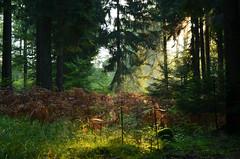 DSC_3516 auf den Spuren von Hänsel und Gretel....... - in the footsteps of Hansel and Gretel ....... (baerli08ww) Tags: deutschland germany rheinlandpfalz rhinelandpalatinate westerwald westerforest wald forest herbst autumn morgensonne morningsun