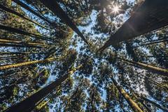 013 (Edinman ) Tags:       trail hiking