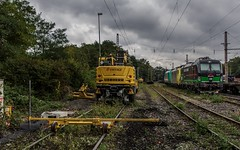 0258_2016_10_04_Wanne_Eickel_wf_Zweiwegebagger_Bauhilfe_ELOC_6193_274_TXLOGISTIC_MRCEdispolok_ES_64_F4_-_089_DISPO_6189_989_ATLU_6185_617 (ruhrpott.sprinter) Tags: ruhrpott sprinter deutschland germany nrw ruhrgebiet gelsenkirchen lokomotive locomotives eisenbahn railroad zug train rail reisezug passenger gter cargo freight fret diesel ellok dampf wanne eickel wanneeickel wf atlu dispo eiffage ell mrcedispolok txlogistik es64u2 es64f4 182 185 189 193 6182 6185 6189 6193 bosporussprinter liebherr zweiwegebagger railroadunit outdoor logo natur graffiti