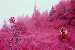 Bold Coast (rsieber82) Tags: select aerochrome infrared kodak film 35mm bw orange nikon f3 f3hp helios 442 58mm maine wilderness nature outdoors backpacking travel rogersieber opticfilm 7600i boldcoast cutler
