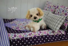 kiki08 (Zhanna Zolotina) Tags: miniature dog ooak teddy bear handmade tinydolhousetoyzz toyzz altair momoko blythe dollhouse puppenhaus