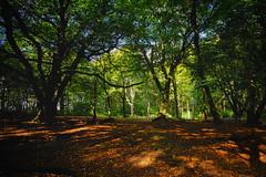 Shadows and Light 8 (JodBart) Tags: woodlandtrust billinge wigan trees green shadows light fuji manuallens
