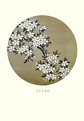 Japanese mountain cherry (Japanese Flower and Bird Art) Tags: flower mountain cherry prunus serrulata rosaceae jakuchu ito ukiyo woodblock picture book japan japanese art readercollection