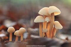 JUGANDO EN EL BOSQUE (Obikani) Tags: macro nature forest entzia araba euskadi canonikos