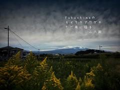 Fukushima    #photohaiku # # (Atsushi Boulder) Tags: photohaiku     autumn  haiku poem poetry verse fall snapseed