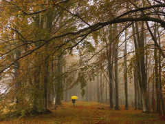 Rain in the Woods (theSnoopyG - thanks for over 460.000 views!) Tags: rain pioggia forest fog mist nebbia bosco foresta autunno autumn outdoors umbrella yellow ombrello camminare camminando weather walking landscape paysage paesaggio woods october herbst path country