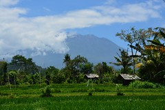 View on Gunung Agung from Sidemen (Bali, Indonesia 2016) (paularps) Tags: indonesi indonesia azie asia asien asi reizen travel paularps arps nikon flickr cultuur natuur 2016 flores lebuanbajo ruteng riung ende maumere bajawa kelimutu sunset sunrise islands island tropical snorkling diving vulcano vulkaan