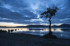 Blue Hour - Iconic Tree at Loch Lomond at Milarrochy Bay - Scotland (Magdalen Green Photography) Tags: bluehour iconictree lochlomond milarrochybay scotland longexposure blueskies pretty scottishlandscapes scottishloch rocks mountains water serene serenity magdalengreenphotography 2829