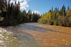 Fast Flowing Rowlinson Creek (MIKOFOX  Show Your EXIF!) Tags: river willows canada nordenskioldriver yukon fall water aspen fujifilmxt1 spruce landscape rapids creek xt1 september showyourexif mikofox xf18135mmf3556rlmoiswr