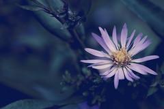 Delicate (Jori Samonen) Tags: flower plant talvipuutarha winter garden helsinki finland sony ilce3000 e 1855mm f3556 oss