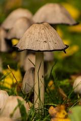 Pilze (MaikeJanina) Tags: brgerpark pilz herbst naturfotografen naturfotografie naturephotography naturfoto nature naturepics natur naturlovers herbstspaziergang autumn fall