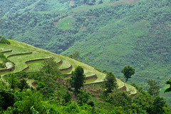 Terraces near Sa Pa. Viet Nam (NeSlaB ф.) Tags: nature field landscape photo asia rice terraces photojournalism vietnam agriculture sapa laocai developingcountries reportage neslab
