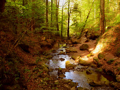 Tiny untouched Creek (Batikart) Tags: travel trees light plants sunlight gre