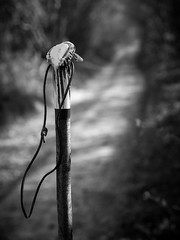 Walking stick (Alan Frost Photography) Tags: blackandwhite monochrome walking sussex walkingstick hooksway