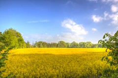 The Fields of Obernbeck (blavandmaster) Tags: park bridge trees sky sun colour reflection tree green art nature water beautiful grass yellow clouds buildings reflections river germany season landscape deutschland licht soleil countryside gut spring eau colours seasons cloudy awesome horizon natur may meadow himmel wolken sunny rivire ciel arbres owl land handheld nrw weser chateau nuages landschaft sonne bume allemagne parc hdr rapeseed westfalen ostwestfalen weserrenaissance wasserschloss contryside lhne photomatix 2013 ulenburg obernbeck dehme