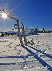 Timberline (Coop Photography) Tags: trees sun snow oregon lens dead photography star 1 nikon day mt skiing or january lodge tokina mount flare hood coop bluebird f28 timberline sunstar d90 2013 1116mm