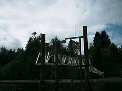 canada bird dock kayak britishcolumbia seagull spikes cowichanbay