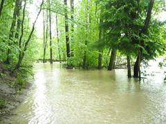 DSCN5307 (R58c) Tags: les landscape czech forrest wald bohemia floods cechy republika ceska krajina zaplavy